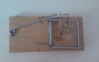 Как поставить мышеловку – инструкция по применению