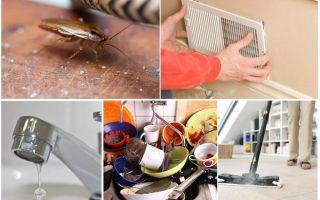 От соседей ползут тараканы: что делать и куда жаловаться