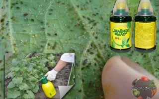 Мыльный раствор от тли на растениях