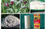Как избавиться от мышей в погребе зимой и летом