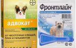 Лучшие капли для собак от блох и клещей