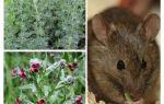 Электрокот ультразвуковой отпугиватель мышей и крыс