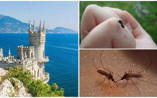 Есть ли комары в крыму летом