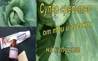 Чем обработать капусту от гусениц и слизней народными средствами