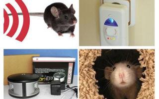 Чего боятся мыши – народные средства