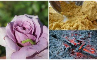 Чем обработать розы от гусениц и тли
