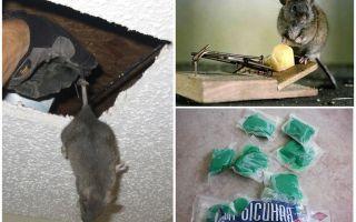 Как избавиться от запаха мышей в доме, квартире, даче, машине