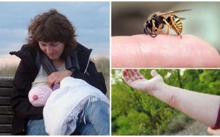 Укус осы при беременности и грудном вскармливании