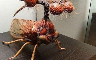 Самые страшные насекомые в мире