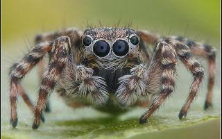 Сколько глаз у паука, где и зачем