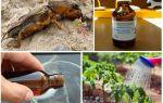 Борьба с медведкой в огороде с помощью нашатырного спирта