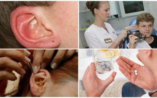 Ушной клещ у человека — симптомы и лечение