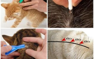 Лучшие капли от блох для кошек, котят и котов. как действуют, куда и как нужно капать