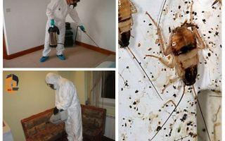 Уничтожение насекомых в квартире и доме