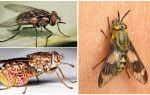Виды мух – их фото, названия и описание