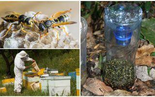 Борьба с осами на пасеке – ловушки и другие средства защиты