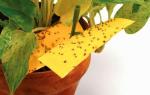 Как избавиться от мушки в цветочном горшке