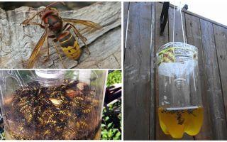 Таблетки от комаров – вред для человека и принцип действия
