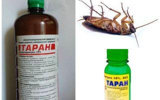 Профессиональные средства от тараканов – какое выбрать