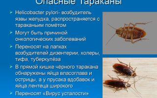 Чем опасны тараканы и какие болезни они переносят