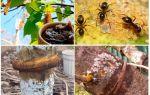 Березовый деготь от муравьев на огороде