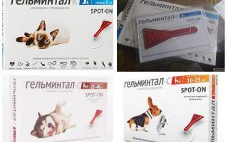 Капли гельминтал на холку для кошек: отзывы и инструкция по применению