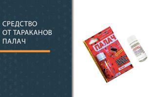Средство от тараканов палач — отзывы и инструкция по применению