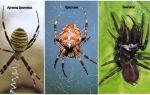 Пауки беларуси – фото, названия и описание