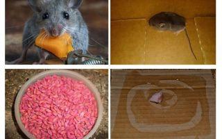 Как избавиться от мышей в гараже