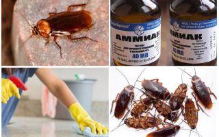 Как убить тараканов – обзор эффективных средств