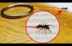 Сколько весит муравей и сколько он может поднять