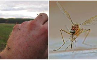 Где нет комаров в мире