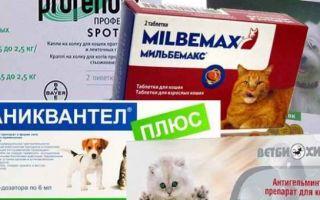 Что делать, если у беременной кошки глисты, можно ли давать таблетки