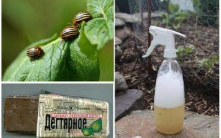 Березовый деготь от колорадского жука – отзывы и инструкция по применению