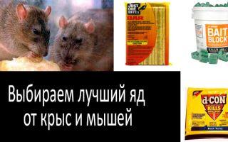 Отрава для крыс и мышей – обзор лучших ядов