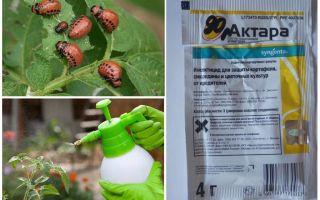 Актара от колорадского жука – инструкция по применению, отзывы, цена