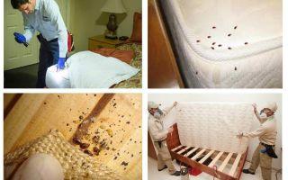 Как обнаружить клопов в квартире: постели, диване и другой мебели