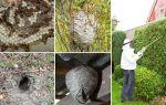 Как избавиться от ос и осиного гнезда на даче и участке
