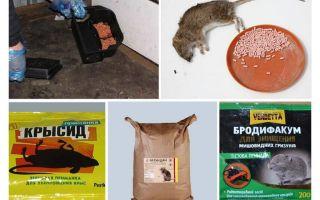 Крысиный яд: состав, как действует, опасность