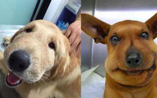 Что делать, если оса укусила собаку