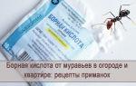 Виды муравьев – фото, названия и описания