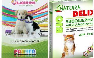 Ошейники для котят от блох – обзор и инструкция по применению