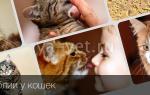 Лямблии у кошек – симптомы и лечение