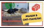 Дома из сип панелей и мыши