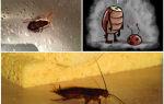 Сколько живут тараканы домашние без воды, еды или головы