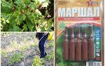 Маршал от колорадского жука – инструкция по применению, отзывы, цена