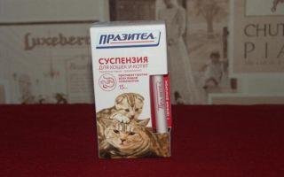 Лучшие суспензии от глистов для кошек и котят