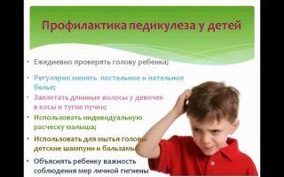 Профилактика педикулеза в школе у детей