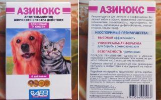 Kак давать собаке таблетки от глистов
