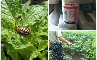Эйфория от колорадского жука – инструкция по применению, цена, отзывы
